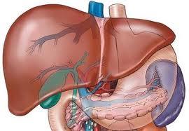 Tổng quan các bệnh thường gặp ở gan 1