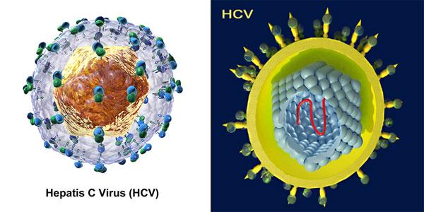 Điều trị bệnh viêm gan C 1